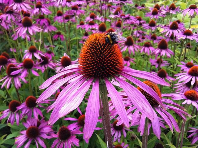 Long Blooming Perennials For Long Lasting Color Colorado Springs