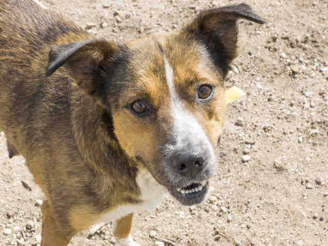 Colorado Springs area pet adoption fairs and events starting April 28, 2018