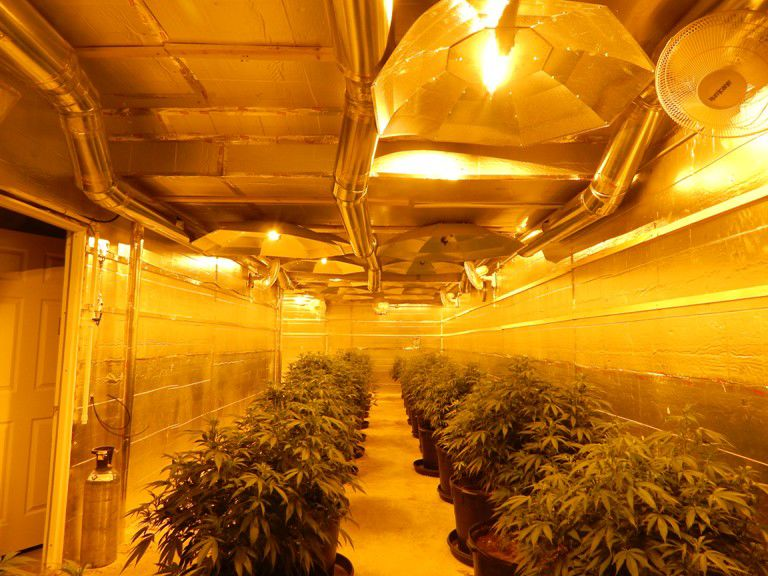 Marijuana plants fill a room of a Pueblo home where an illegal marijuana grow operation was discovered by the Pueblo County Sheriff's Office May 17, 2016. Photo courtesy of Pueblo County Sheriff