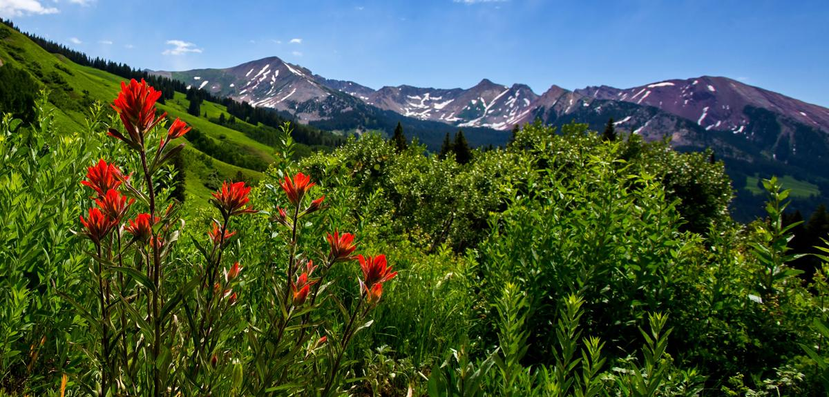 Indian paintbrush blooms on a hillside Monday, July 3, 2017, in the Washington Gulch area outside Crested Butte, Colo. The Crested Butte Wildflower Festival begins July 7 and runs through July 16 in the Colorado mountain town.  (The Gazette, Christian Murdock)