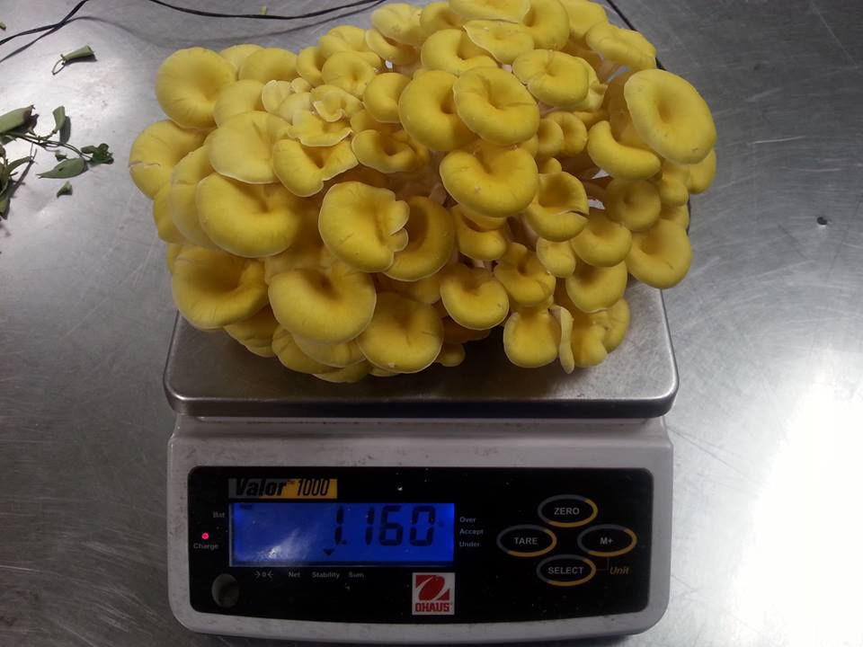 Mushrooms thought to be a super food