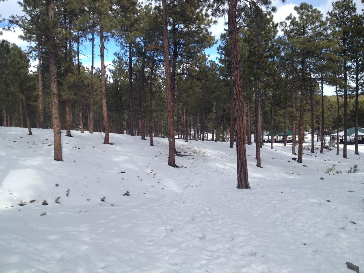 Fox Run, Black Forest parks offer an oasis of ponderosa pine woodland