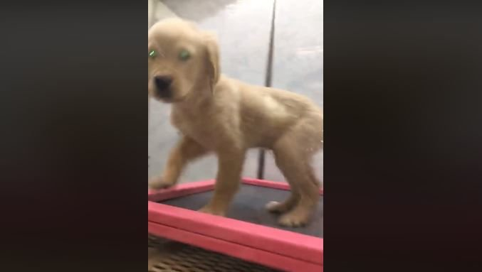 Employee fired after viral video shows puppy being thrown back into cage