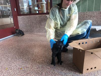 Cats seized from Steel City Alley Cats Coalition's shelter in Pueblo