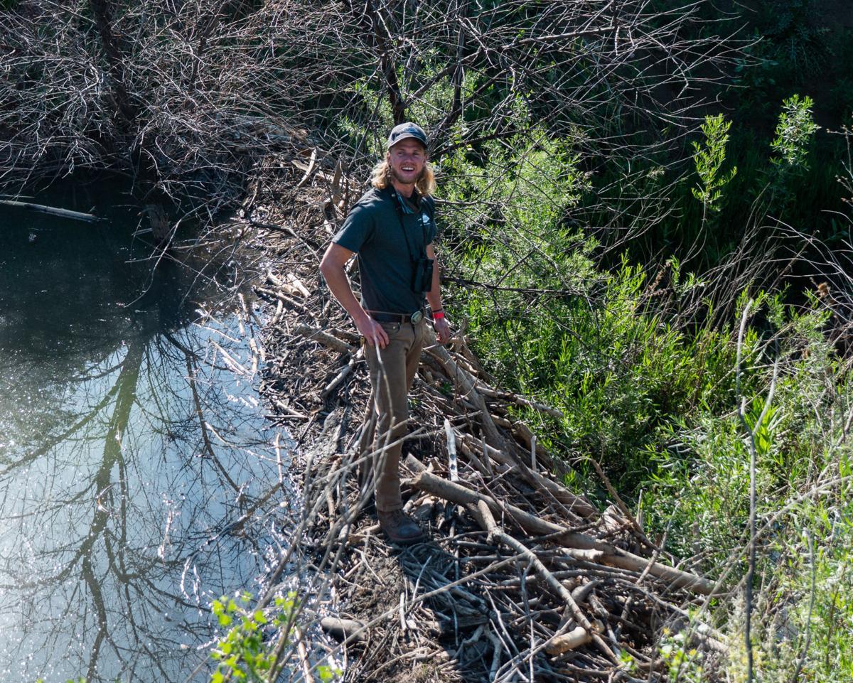 Sam Richards on beaver dam, courtesy City of Colorado Springs