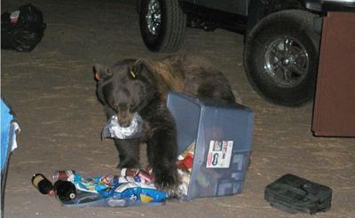 Bear CMSP.jpg