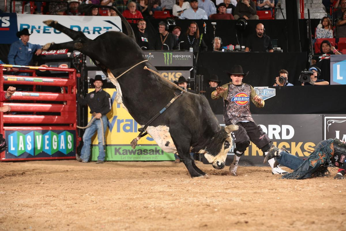 Matt Triplett attempts to ride Wolf Creek/Shepherd Hills Cutlery/Thomas Luthy's Shepherd Hills Stockman and Cody Webster steps in during the third round of the 2014 Built Ford Tough Series PBR. Photo by Andy Watson
