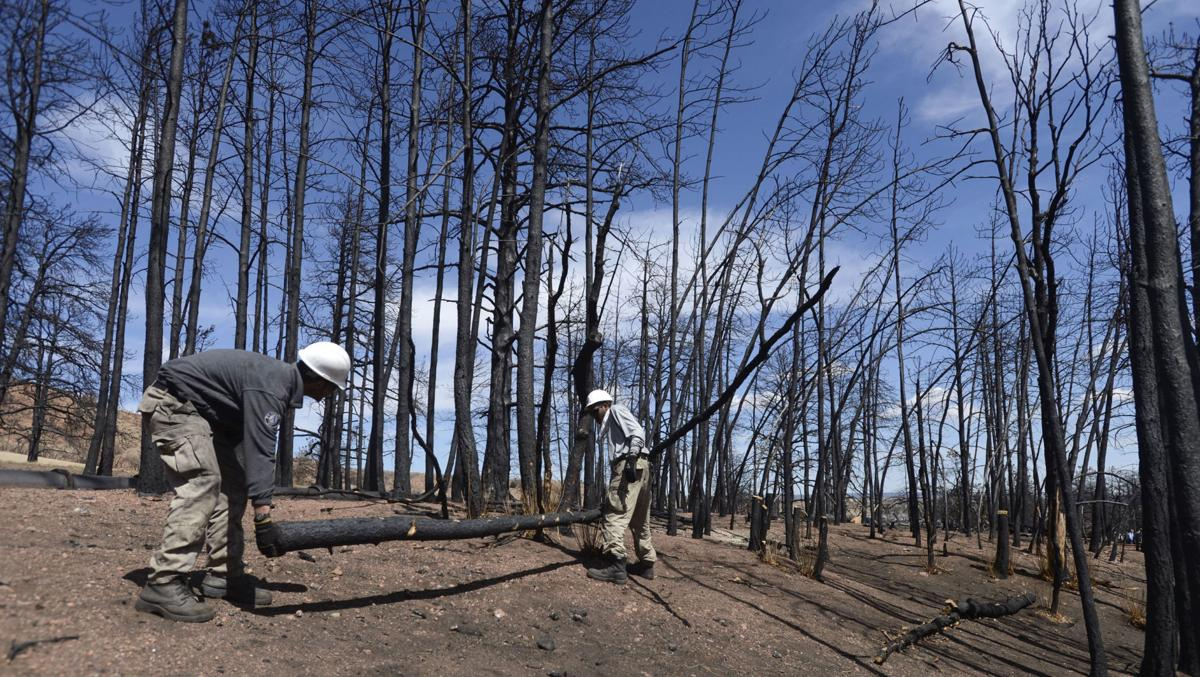Chopping scorched Flying W trees a valuable experience for