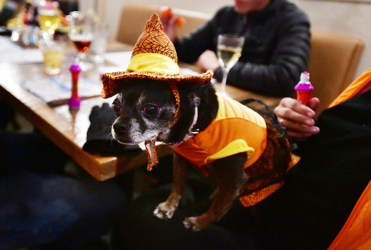 Pups and their owners have a howlin' good time on Halloween