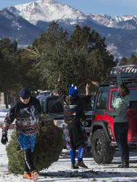 Where to recycle Christmas trees in Colorado Springs