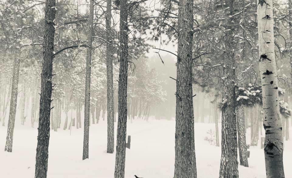 beth woodmoor.jpg