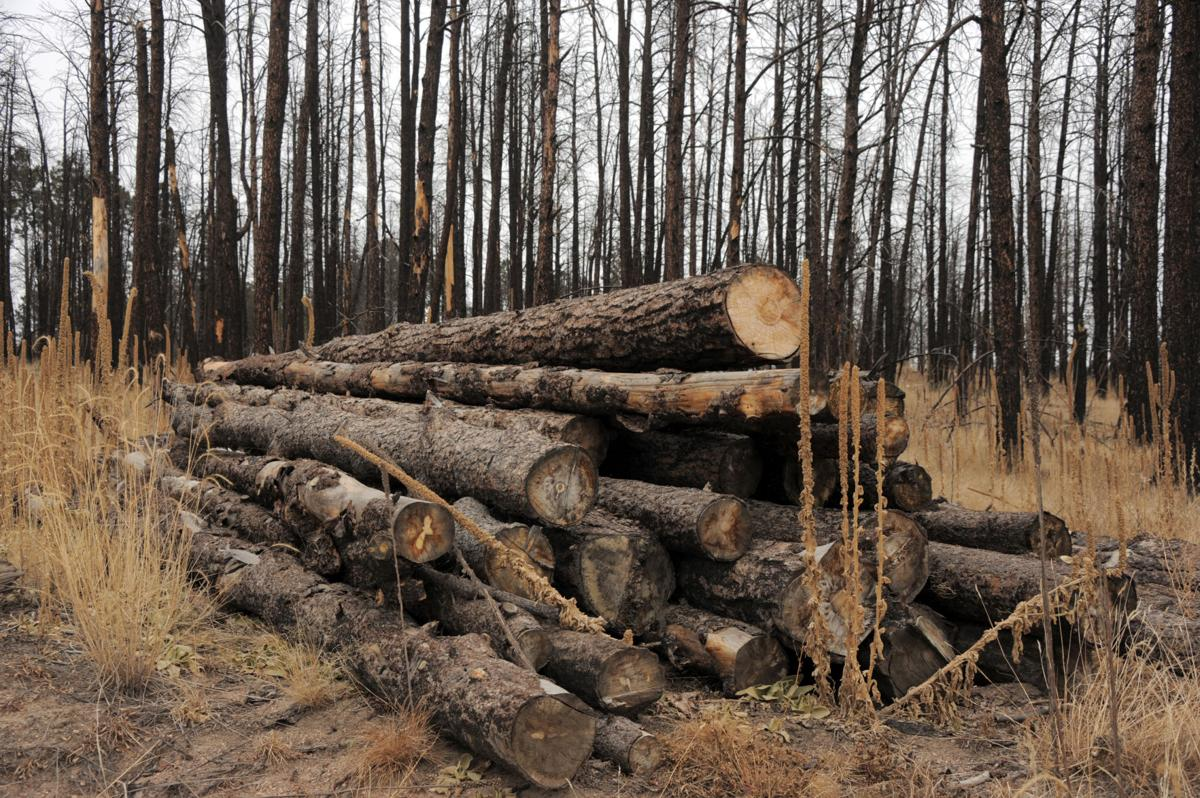 Cleanup, mitigation continues amidst danger of falling trees three years after Black Forest fire