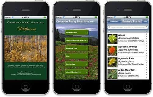 Colorado wildflower app makes outdoor identification easy