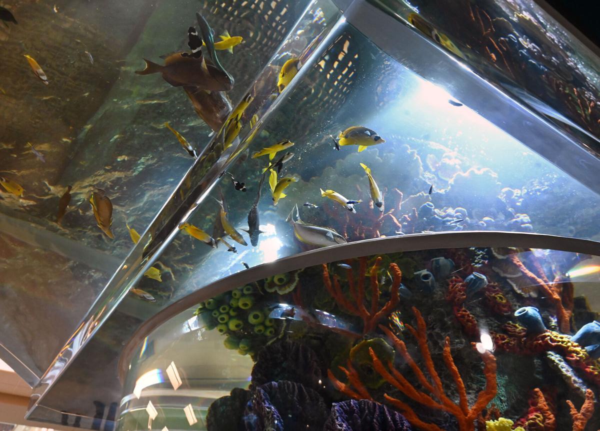 Scheel's brings tropical reef to Colorado Springs