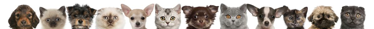 Colorado Springs area pet adoption fairs and events starting Jan. 27, 2017