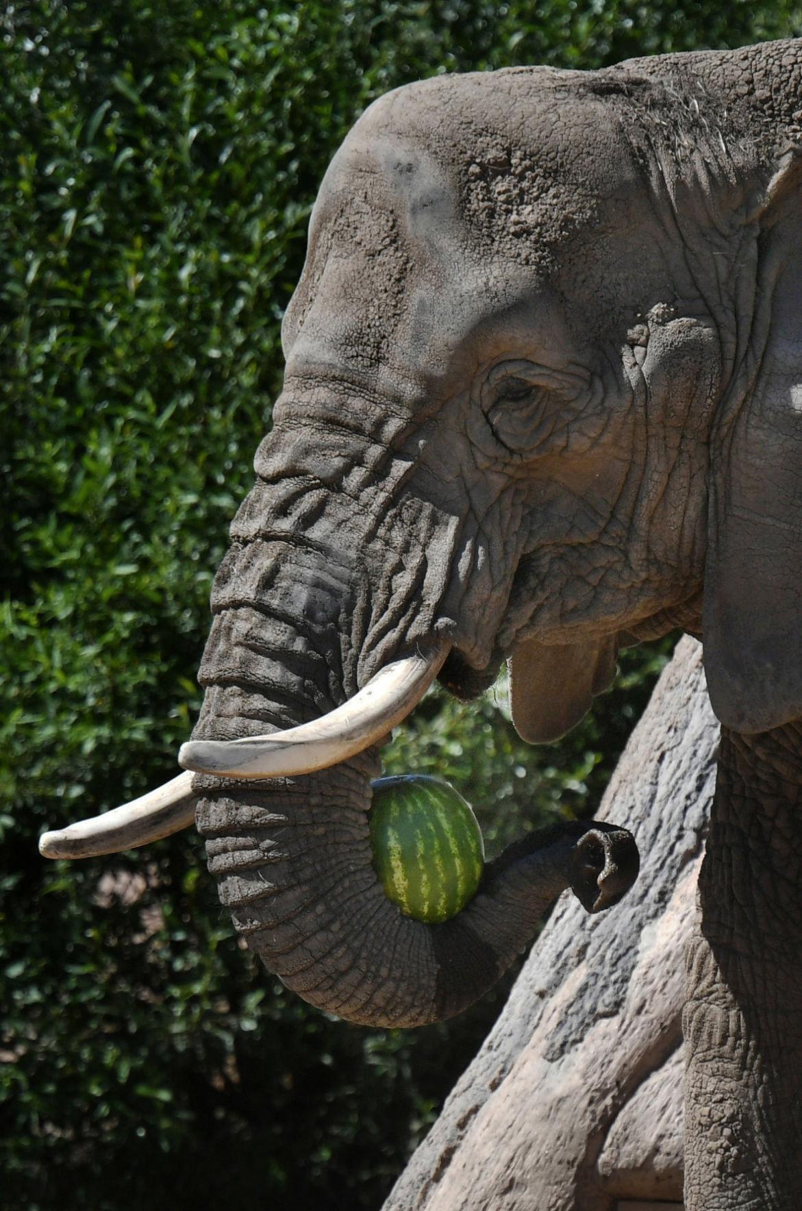 Happy birthday, Missy the elephant!