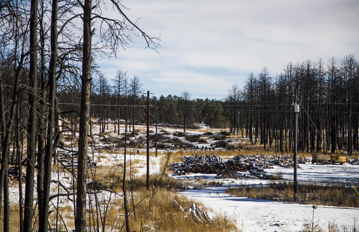 Government funds helping Black Forest mitigation work