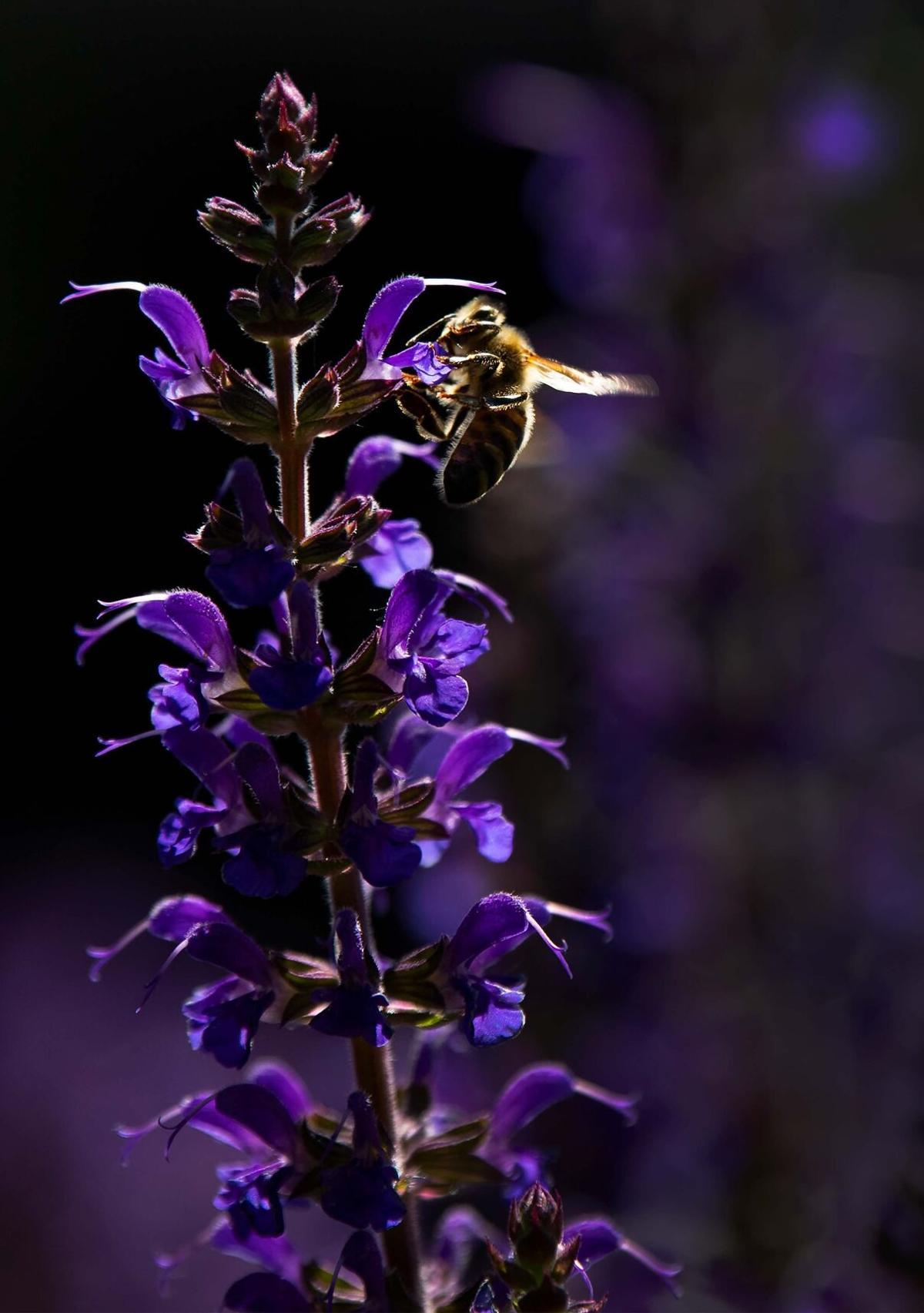 061921-hg-pollinators 1a.jpg