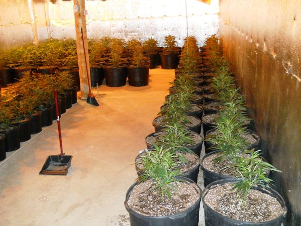 Springs Mayor: Day of reckoning coming for city's illegal marijuana growers