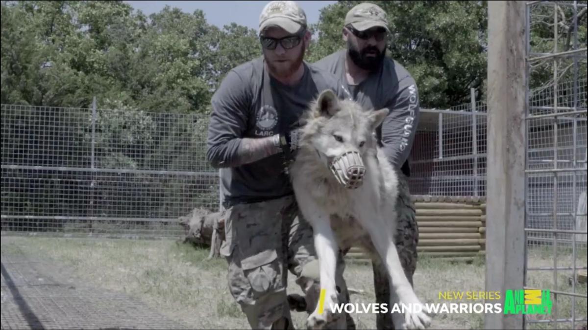 wolves 3.jpg