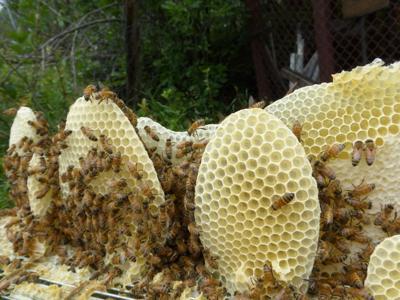 Manitou Springs honeybee hives