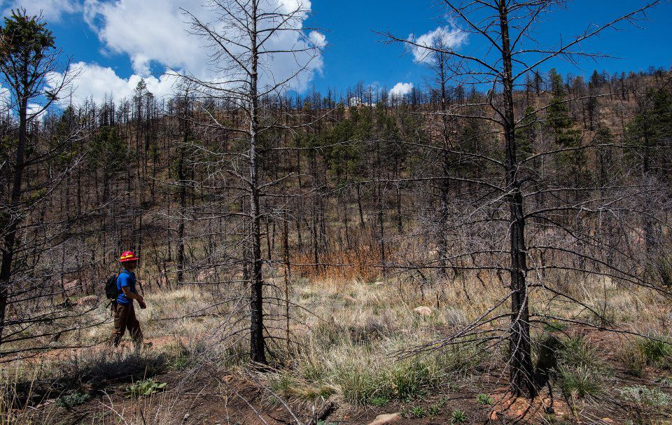 Joe Lavorini of Rocky Mountain Field Institute hikes the Waldo Canyon Trail just before the start of the loop Friday, May 1, 2015. (The Gazette, Christian Murdock)
