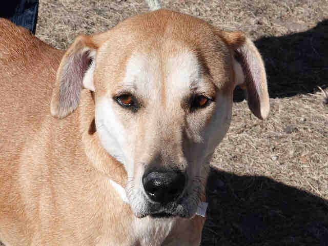 Colorado Springs area pet adoption fairs and events starting Jan. 2, 2018