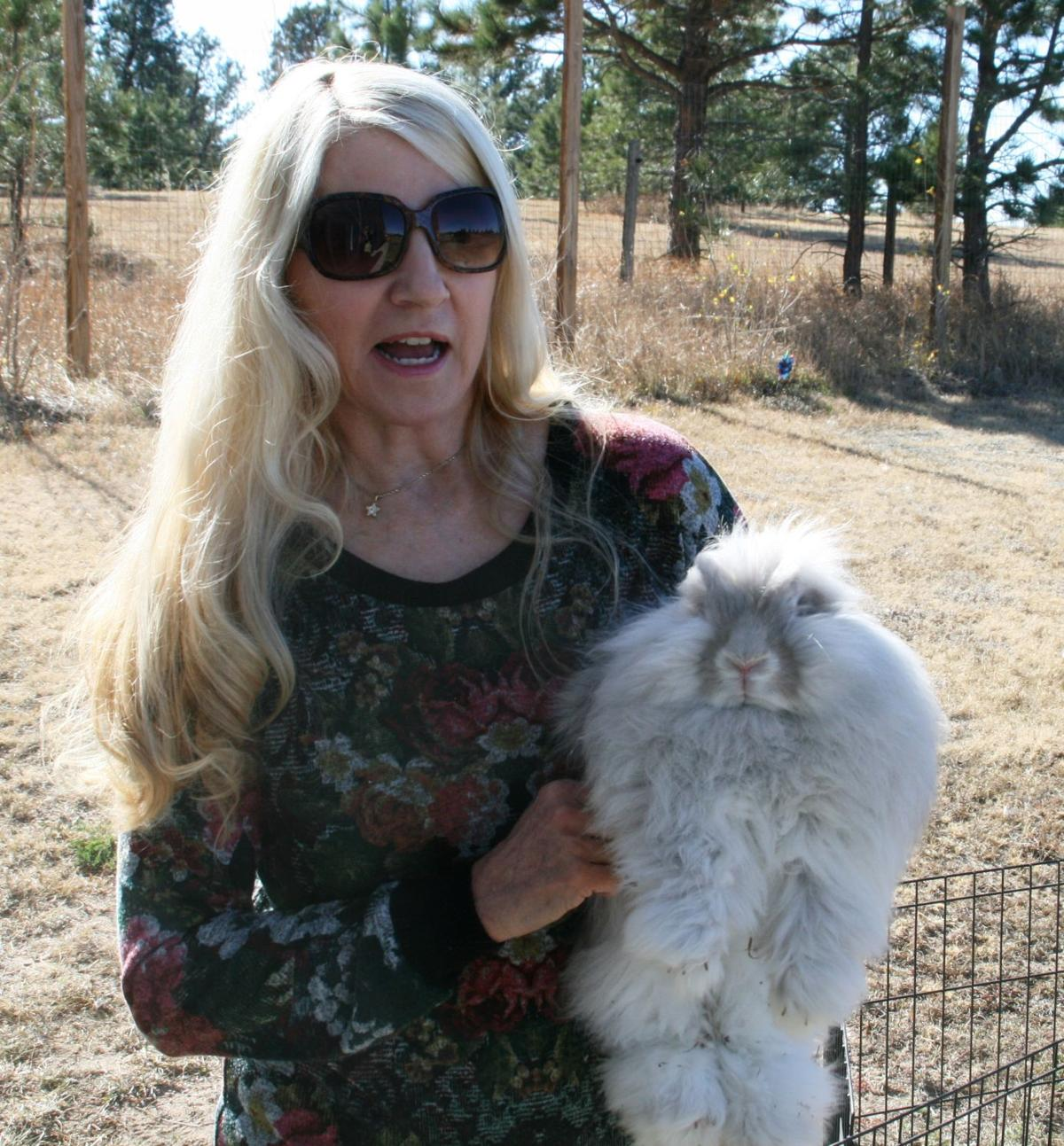 The Country Life: Angora rabbits find home, purpose at Black Forest's Woodlake Woolies