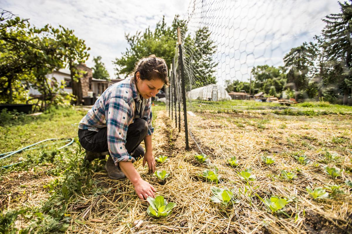 Big plans grow for small Colorado Springs farm