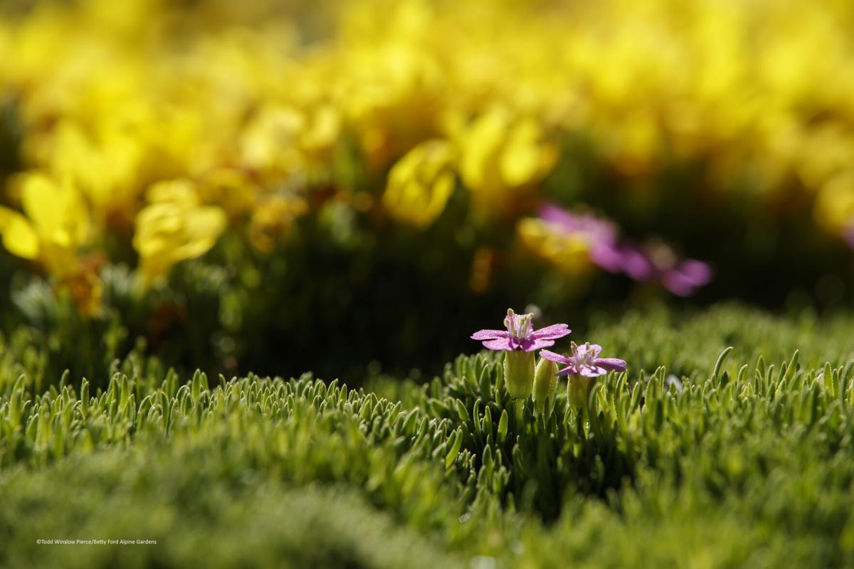 alpine gardens 1.jpg