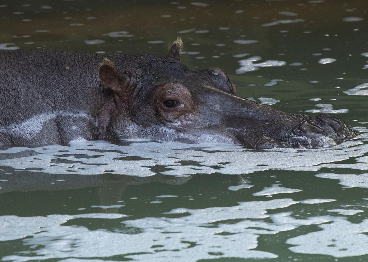 072221-news-hippo 03