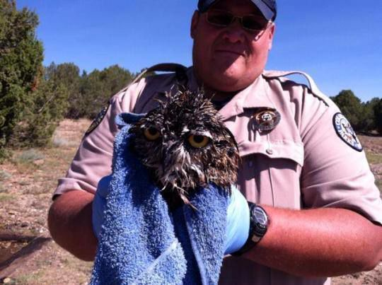Blog: Colorado Parks and Wildlife rescue owl from toilet