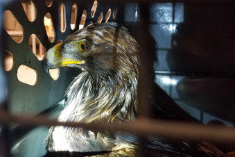 Eagle rescue all in a day's work for Colorado wildlife