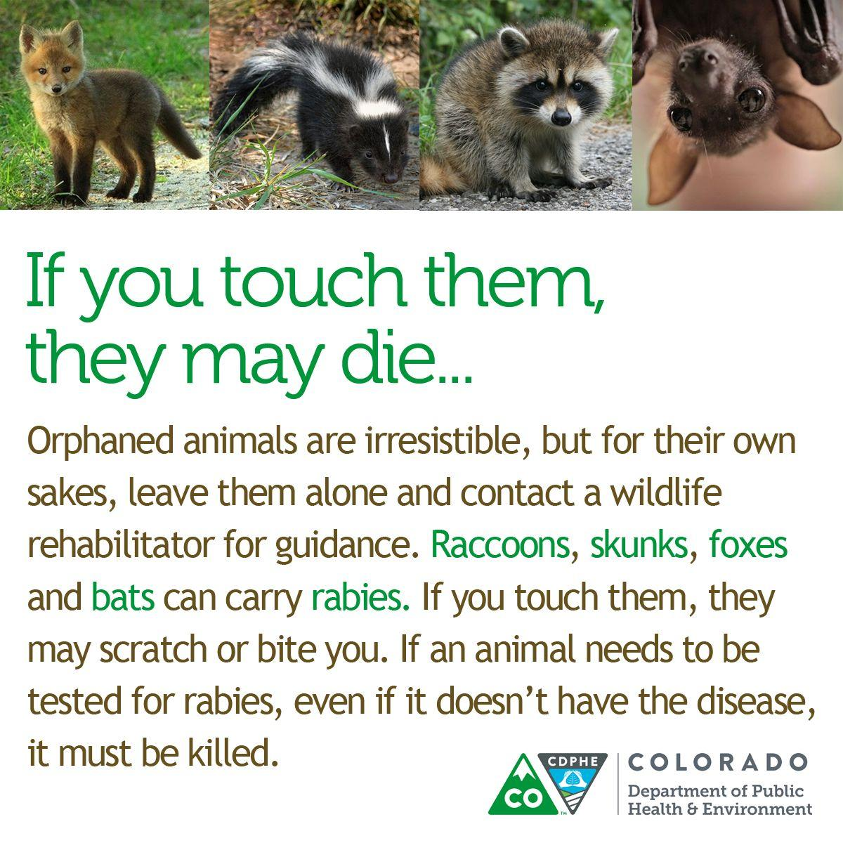 El Paso County sees six times normal rabies cases this year, residents should vaccinate pets and stay wary