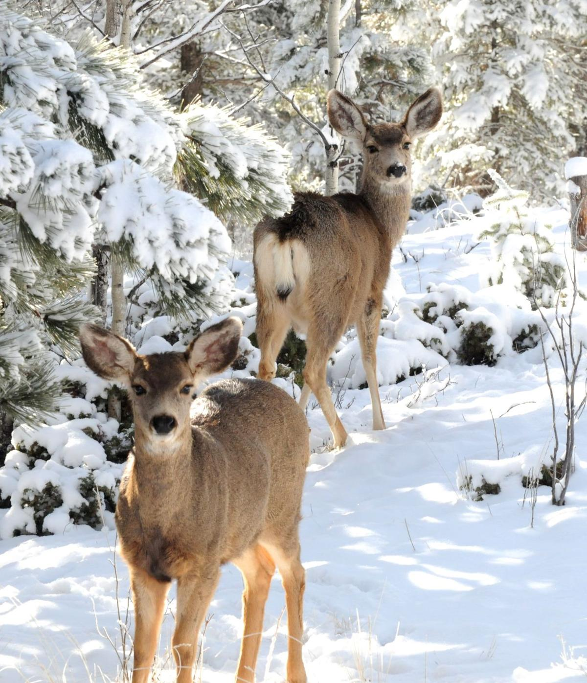 The Colorado hills are alive with wildlife