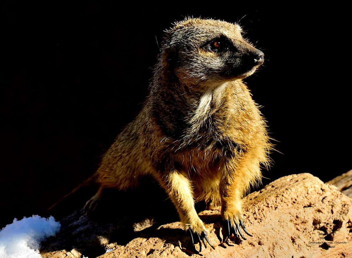 A day among animals at Cheyenne Mountain Zoo