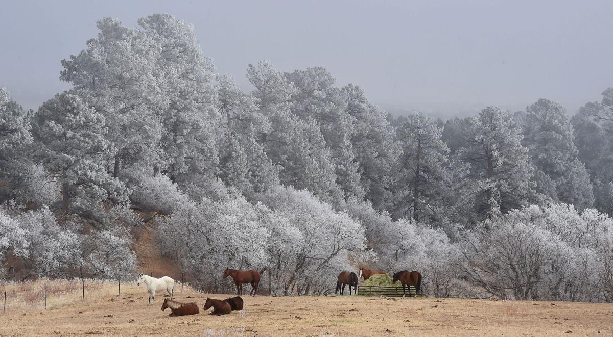 012521-news-frosty 01.jpg