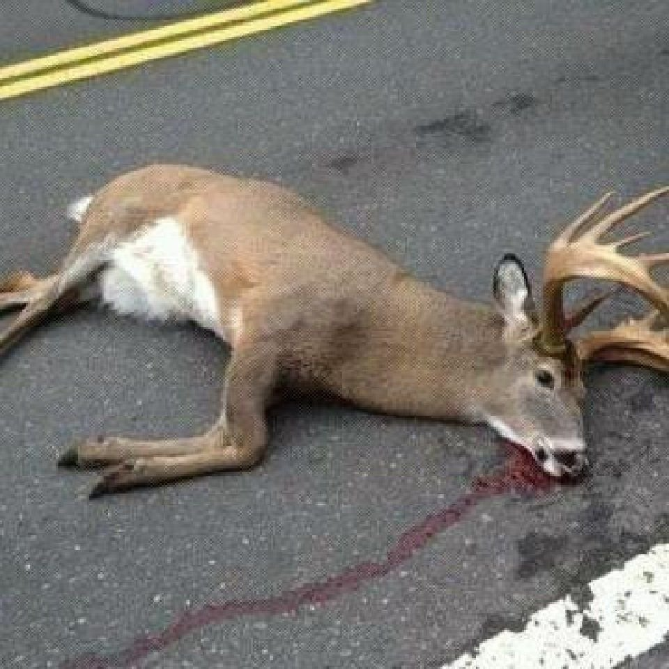 EDITORIAL: Allow urban hunters to cull deer