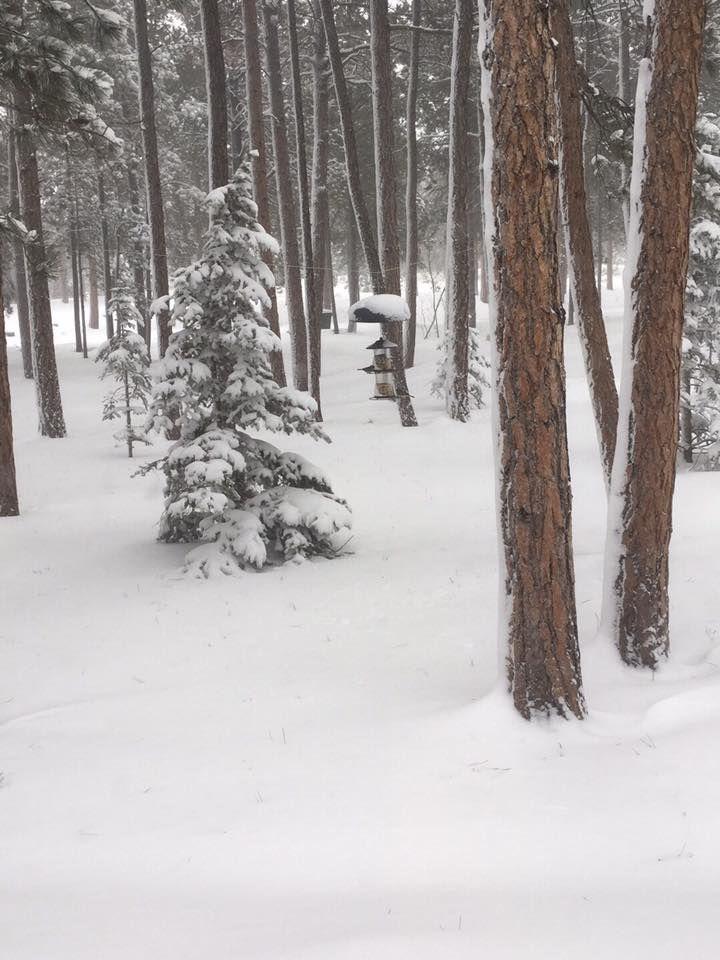 snow 012219.jpg