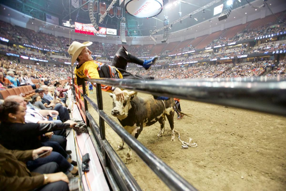 Frank Newsom gets run up the fence during round one of the Anaheim stop of the BFTS PBR. Photo by Matt Breneman / bullstockmedia.com