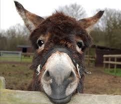 Blog: Yoga, coffee and donkeys