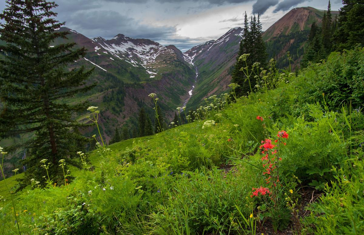 Wildflowers abloom in time for Crested Butte Wildflower Festival