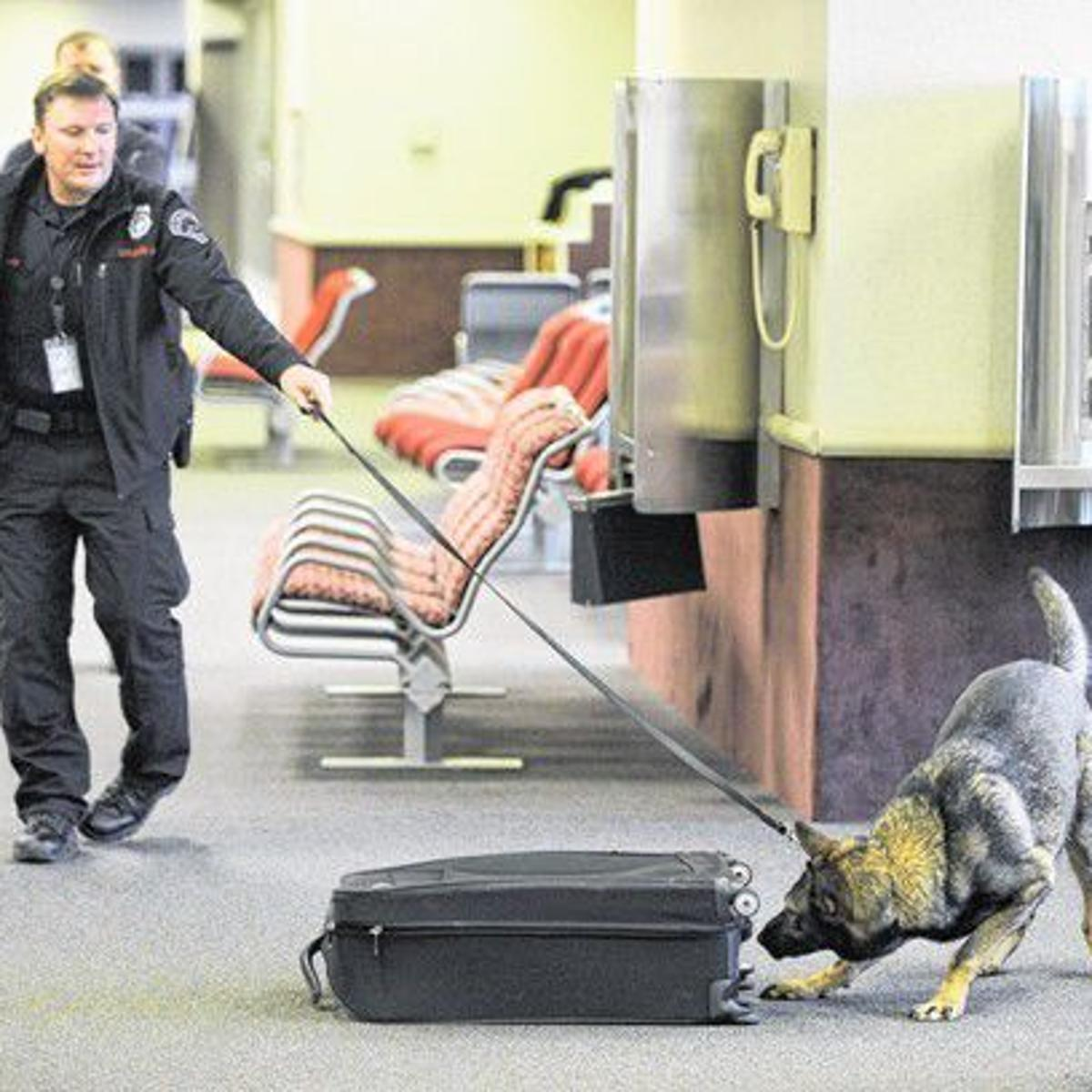 Colorado Springs Airport dogs have a nose for trouble