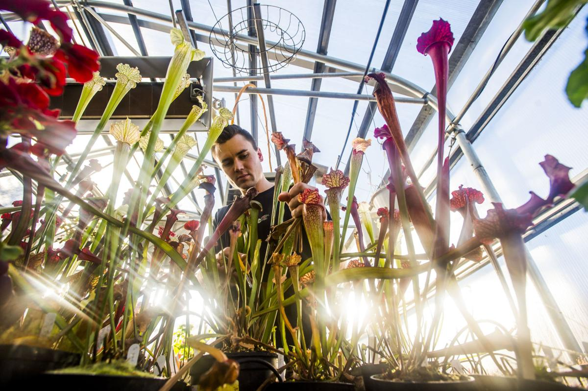 Colorado Springs man passionate about carnivorous plants