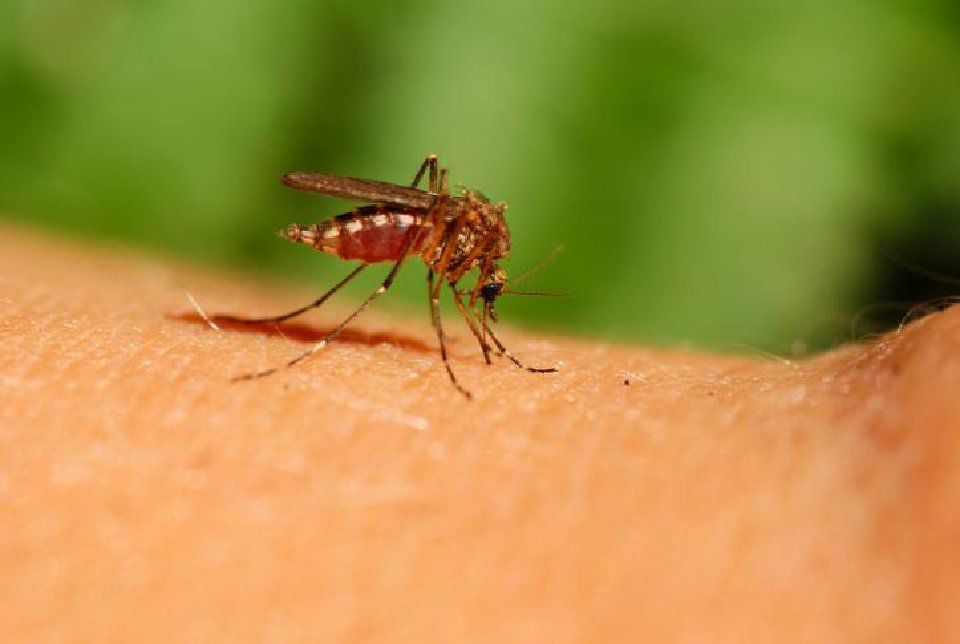 First West Nile virus this year recorded in Colorado