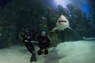 Swim with sharks at this Colorado destination