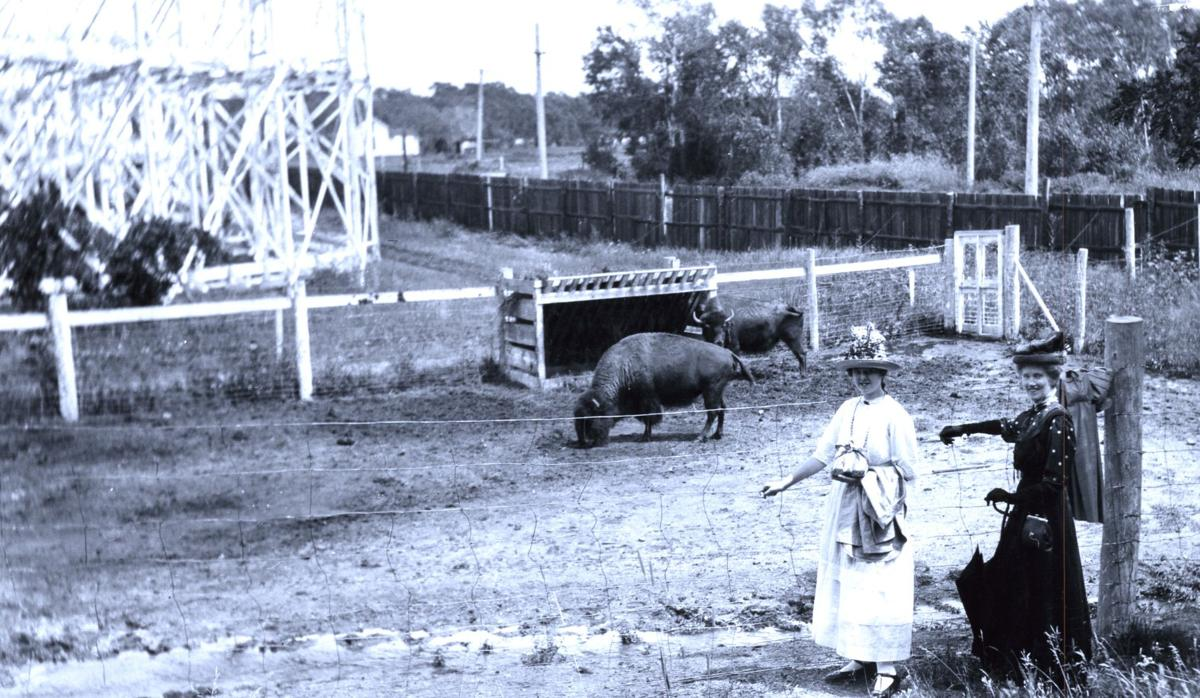 Ladies pose in front of the Buffalo pen at the Zoo Park. From the collection of the Colorado Springs Pioneers Museum.
