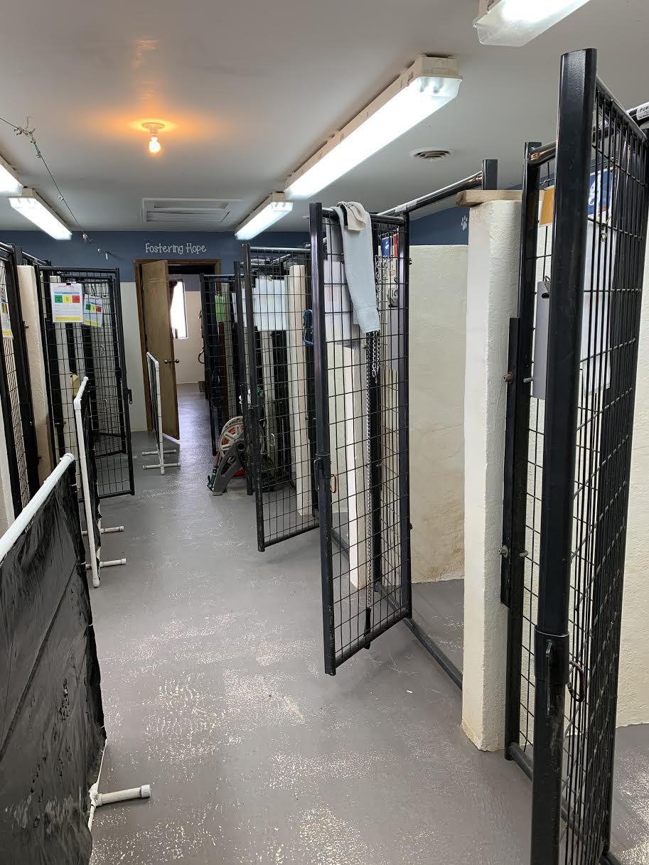 empty dog kennels at TCRAS.jpeg