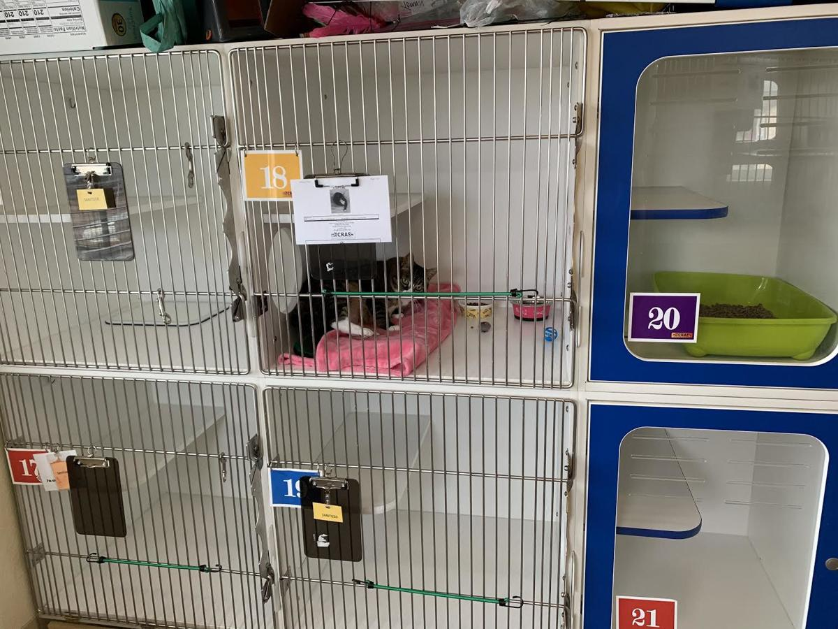 Cat in kennel at TCRAS.jpeg