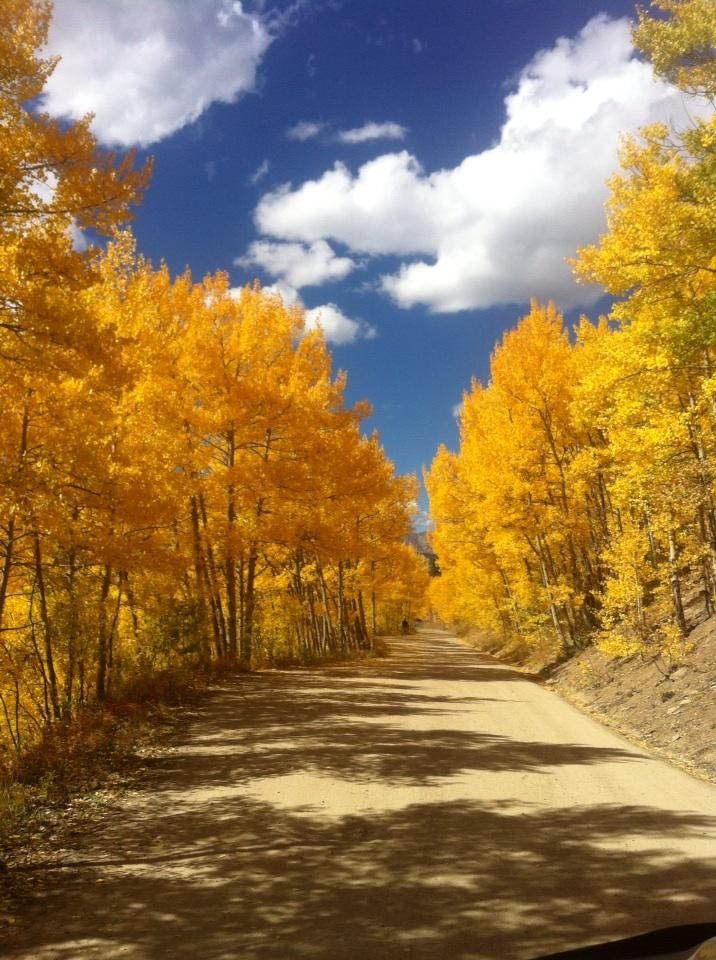 Stunning gold rush of aspens on Boreas Pass in Breckenridge. Photo by Nathan Van Dyne.